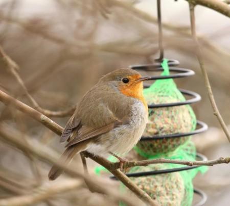Småfuglene